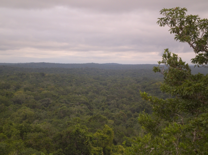 forests around tikal